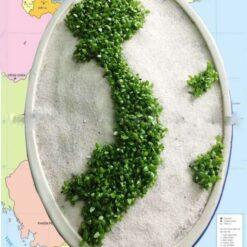 Cây May Mắn Bản Đồ Việt Nam