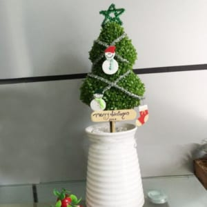 Cây May Mắn Cây Thông Noel Bình Sứ