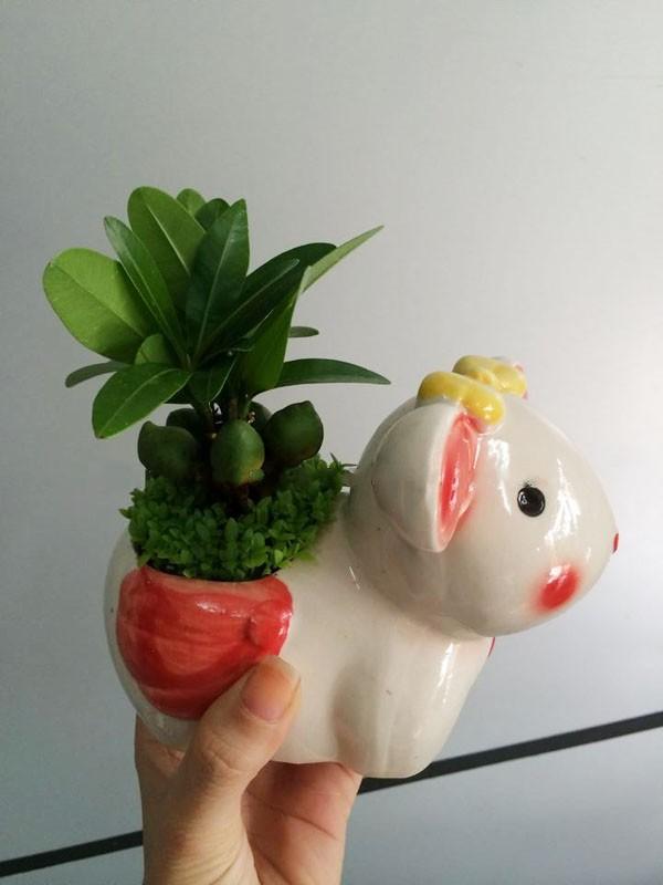 Cây May Mắn Tài Lộc Chậu Con Thỏ5