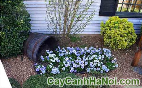 Ý tưởng thiết kế vườn: Làm một thác hoa từ chậu bể