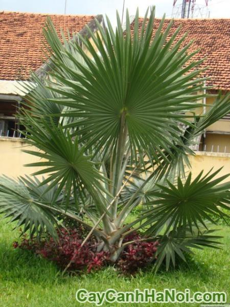 Những loại cây đem may măn về nhà