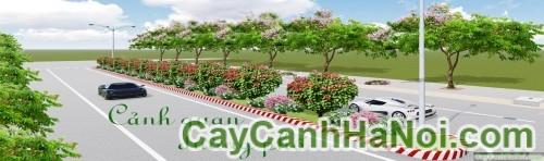 Những quy luật cần lưu ý khi trồng cây trên đường phố