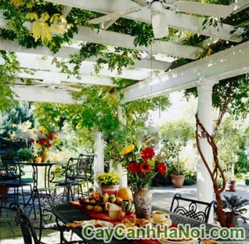 Lãng mạn trong không gian xanh của giàn hoa