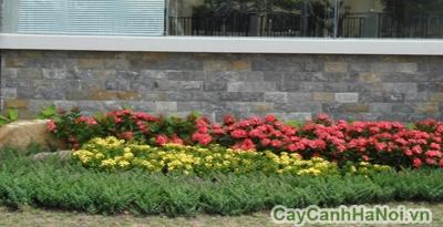 Công trình thiết kế bồn hoa xung quanh nhà