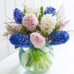 hoa ông tiên
