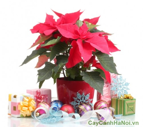 christmas-decoration-with-flowers
