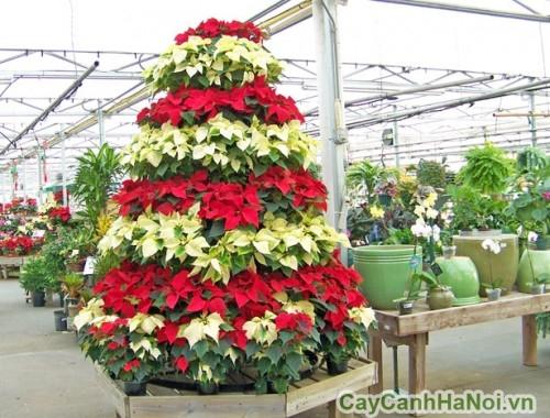 poinsettia-christmas-tree