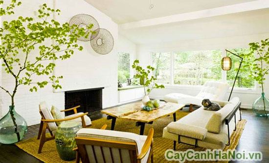 Phong thủy cây xanh phòng khách