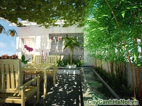 Phong thủy cây xanh nhà hàng