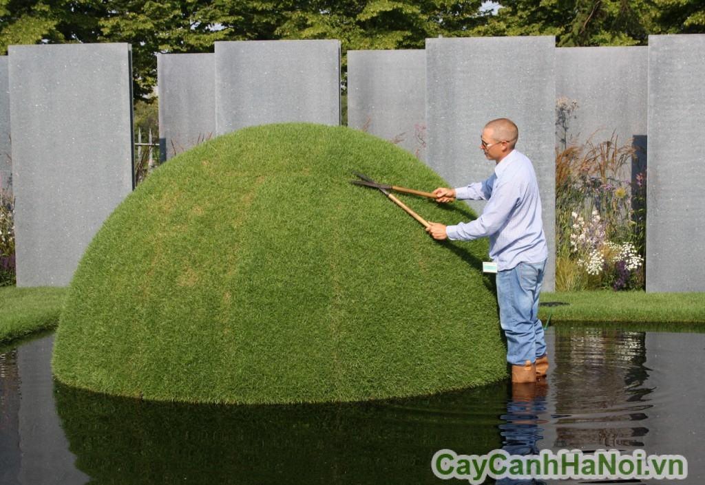 Dịch vụ cắt cỏ