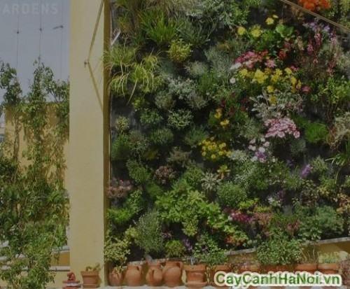 Lợi ích vườn tường