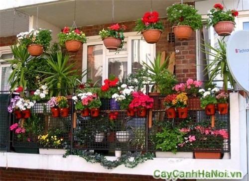 Vườn tường trên ban công