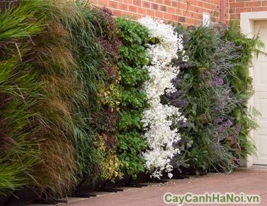 Vườn trên tường ban công