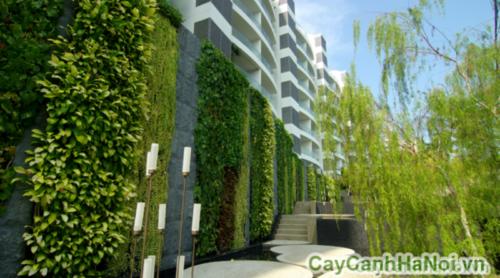 Vườn cây trên tường và lợi ích