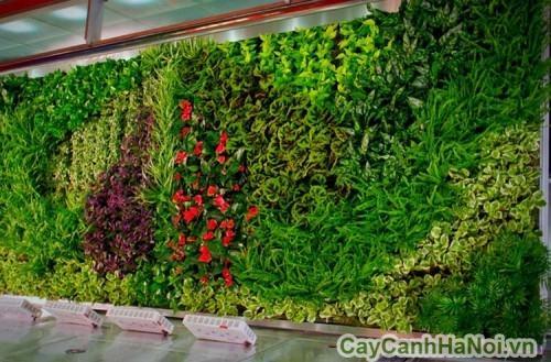 Cây trồng trên vườn tường