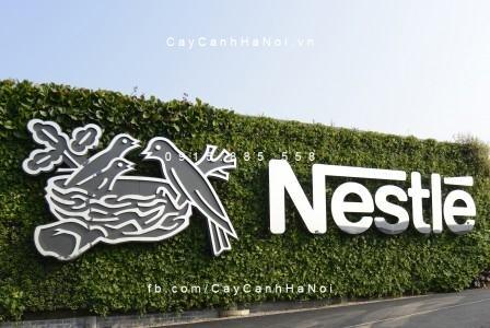 Nestle-vuon-thang-dung-6