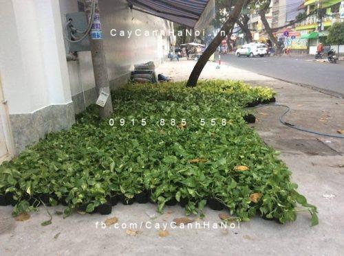 Thi cong tuong cay dep (1) (1)