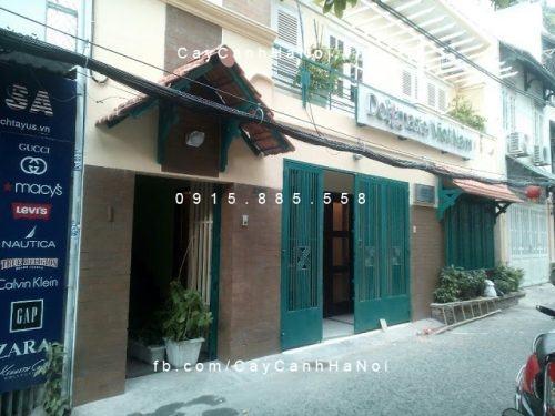 thi cong tuong cay (2)