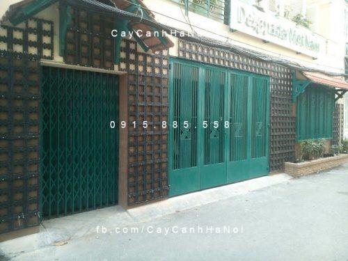 thi cong tuong cay (3)