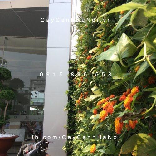 thi cong tuong cay dep (4)