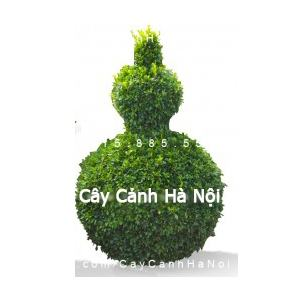 cay_gua_nghe_thuat_hinh_ho_lo