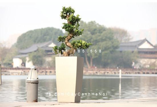 chau_composite_trong_cay_thong_minh_cao_cap_n32
