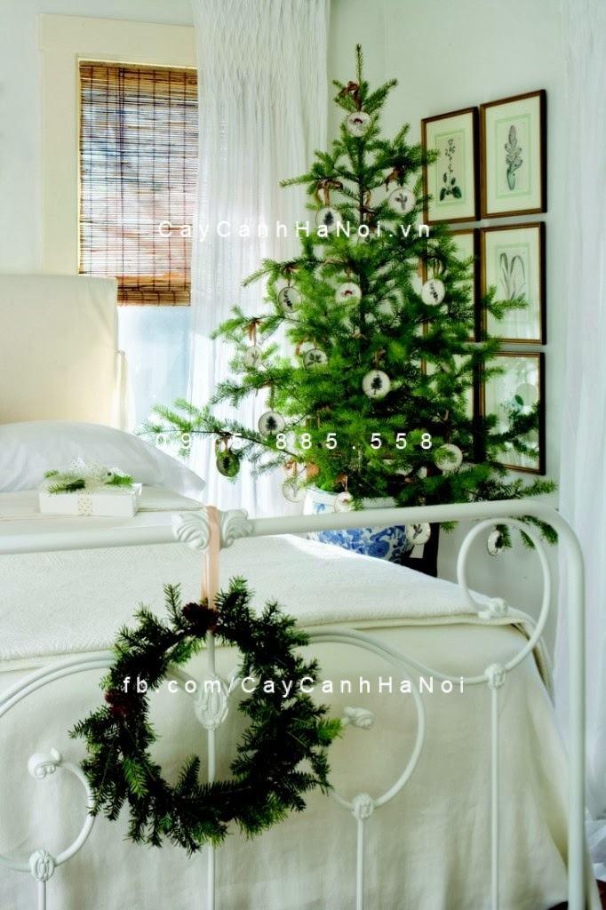 cây cảnh phong thủy trong phòng ngủ