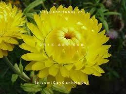 cây hoa cảnh phong thủy