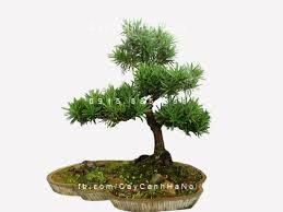 đặt cây trong nhà theo phong thủy