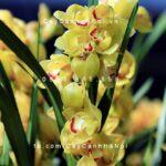 hoa địa lan 2