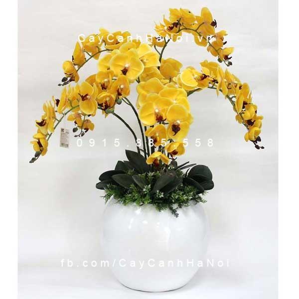 hoa lan hồ điệp 2
