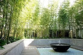 cây cảnh phong thủy sân vườn