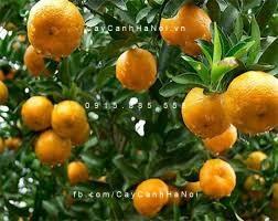 trồng cây ăn trái theo phong thủy