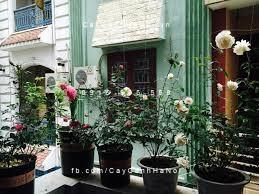 trồng cây ở ban công theo phong thủy