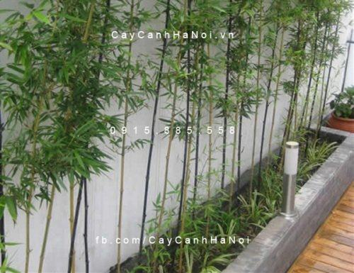 trồng cây quanh nhà theo phong thủy
