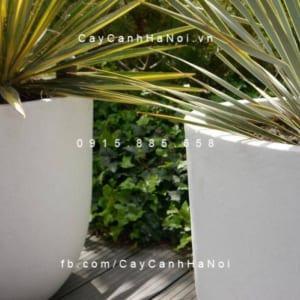 Chậu cây composite iPot cao cấp | IP-00013