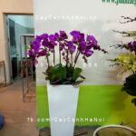 Chậu hoa composite iPot vát đáy cao cấp| IP-00073