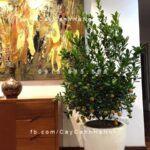 Chậu nhựa composite iPot tròn trồng cây| IP-00049