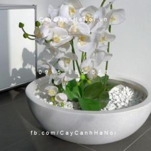 Chậu nhựa composite iPot trồng cây| IP-00008