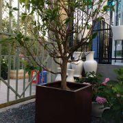 Chậu nhựa composite iPot trồng cây vuông | IP-00086