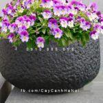 Chậu nhựa trồng cây composite iPot cao cấp| IP-00106