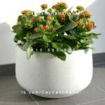Chậu nhựa trồng cây composite iPot tròn| IP-00102
