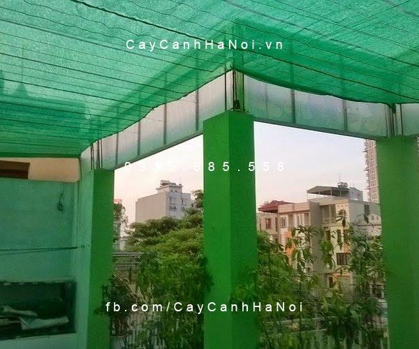 Luoi-che-nang-thai-lan(13)