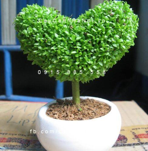 Hoa cảnh ngày lễ tình yêu
