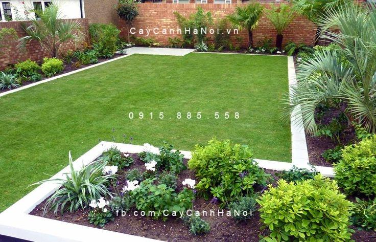cỏ lông heo dùng trong sân vườn