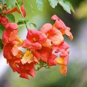 hoa đăng tiêu độc đáo