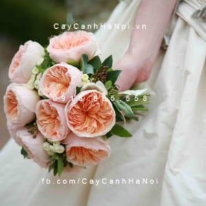 Hình ảnh hoa hồng Juliet