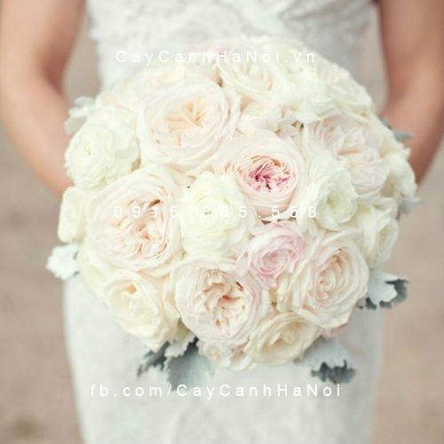 Hình ảnh hoa hồng Keira