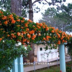 Hoa chùm ớt trang trí