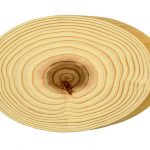 gỗ cây liễu sam